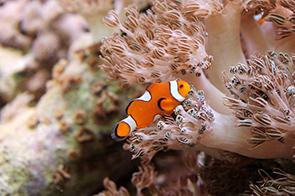 Personal Aquarium